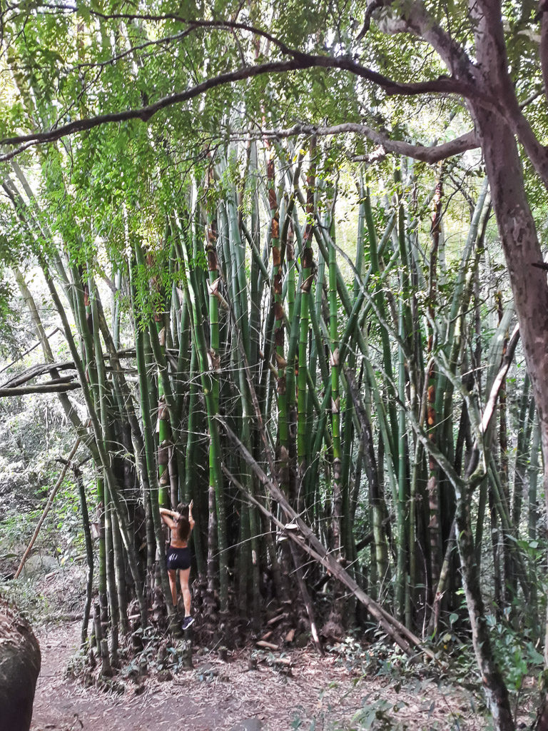 hiking in Ilha Grande Brazil