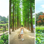 How to visit Nami Island From Seoul