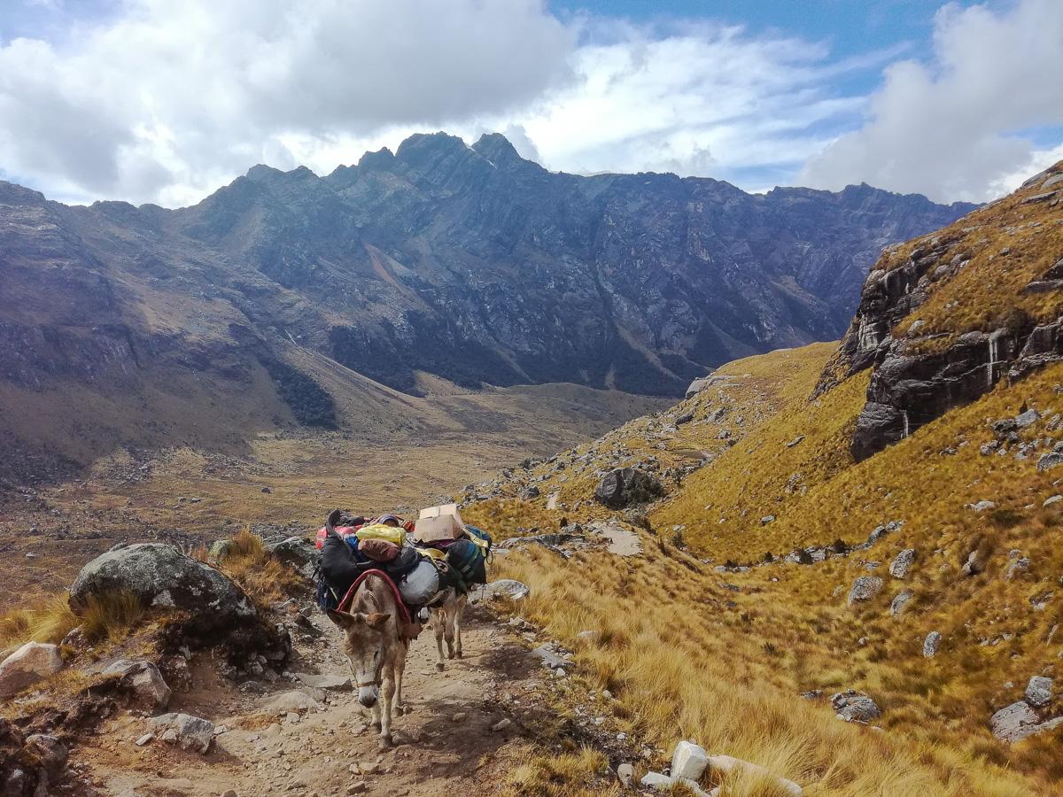 Santa Cruz Trek Huaraz Donkeys
