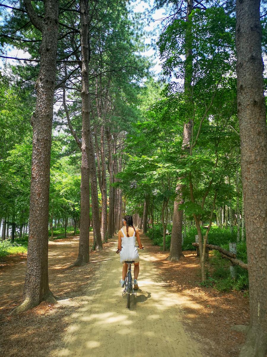 Biking on the pinetree lane on Nami Island